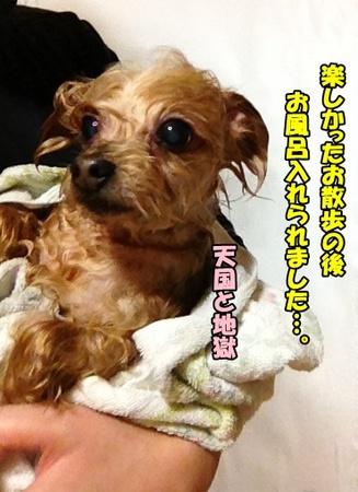 20121231②.JPG