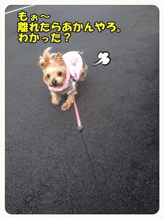 20130317_4.JPG