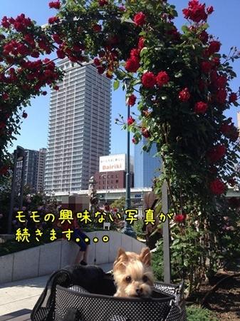 20130512_3'.JPG