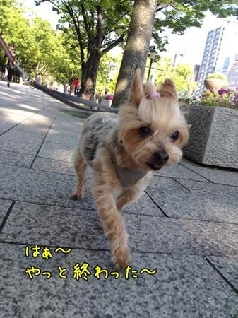 20130512_8.JPG