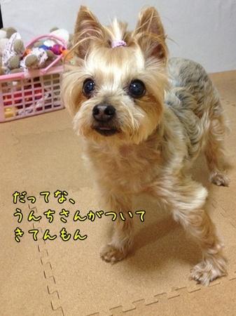 20130514_2.JPG