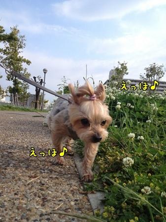 20130519_1.JPG