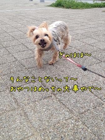 20130519_5.JPG