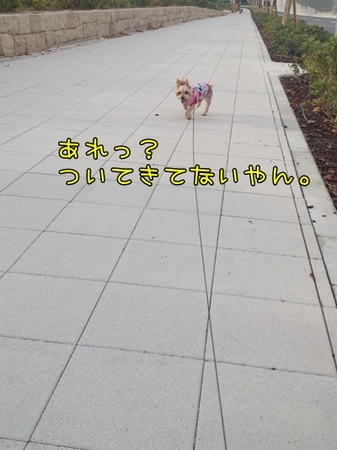 20130908_3.JPG