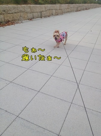 20130908_4.JPG