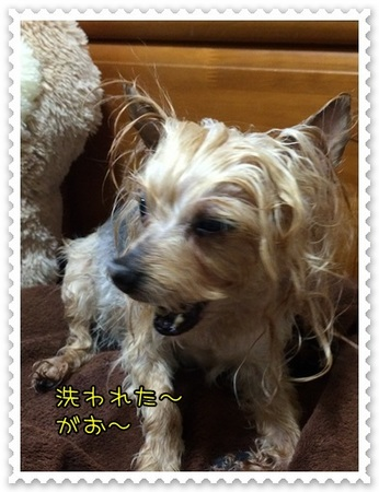 20140414_5.JPG