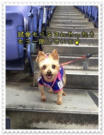 20140513_7.JPG