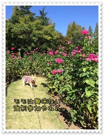 20141025_3.JPG