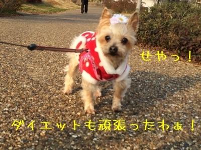20141231_2.JPG
