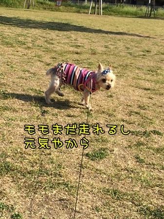 20150518_2.JPG