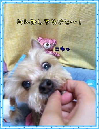 20150830_7.JPG