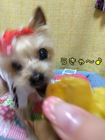 20151015_1.JPG