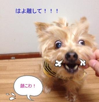 ゴクリ3.JPG