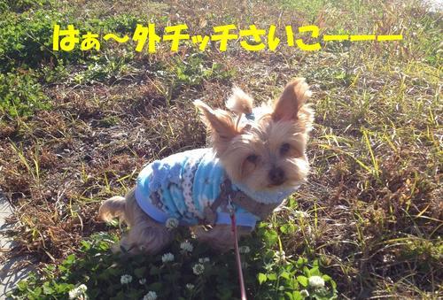 IMG_2554come1.jpg