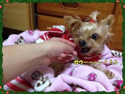 20121219④.JPG