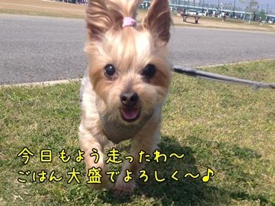 20130518_6.JPG