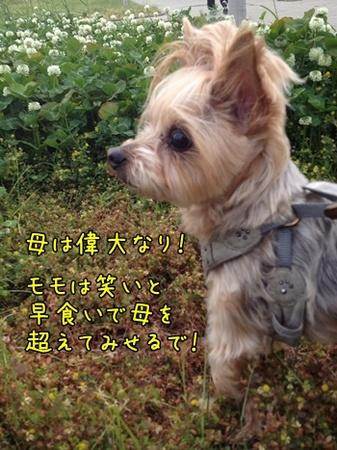 20130520_5.JPG