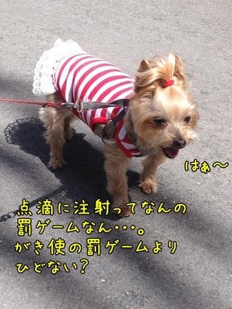 20130531_4.JPG