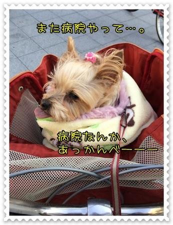 20140112_1.JPG