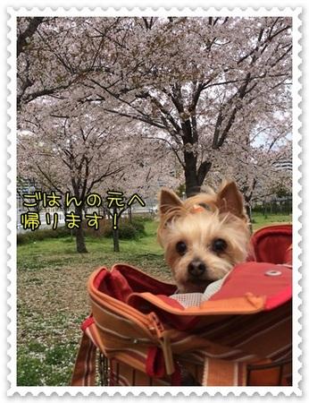 20140409_5.JPG