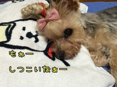 20160516_5.JPG