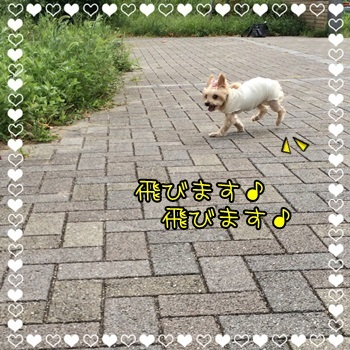 IMG_9579.JPG